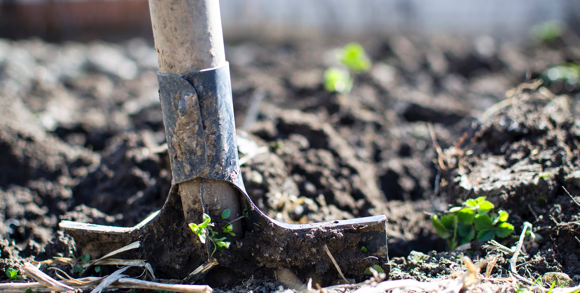 Therapeutic Gardening for Addiction Recovery