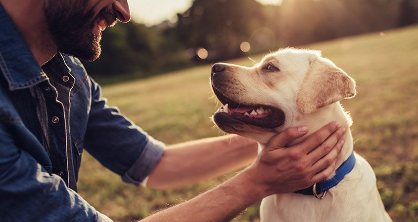 How do Pets make a Difference in Addiction Recovery?