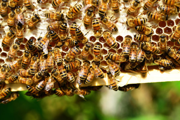 honeycomb-insect-bees-honey-53444